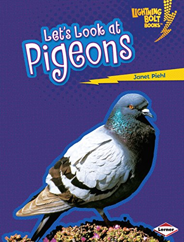 Lets Look at Pigeons