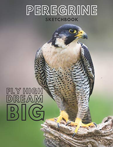 Peregrine falcon Sketchbook Large sketchbook for drawing 8.5 x 11 inch (21.59 x 27.94 cm) 150 pages