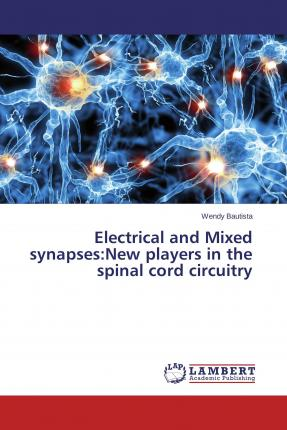 Electrical and Mixed synapses:New players in the spinal cord circuitry